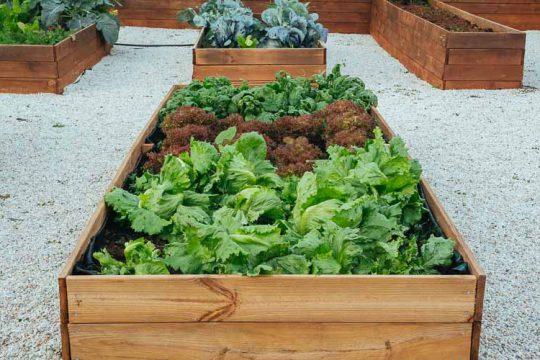 Υπερυψωμένα παρτέρια στον κήπο: Κατασκευή και πλεονεκτήματα (+video)