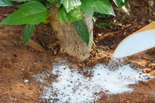 Μαγνήσιο, τι προσφέρει ως λίπασμα σε φυτά και καλλιέργειες
