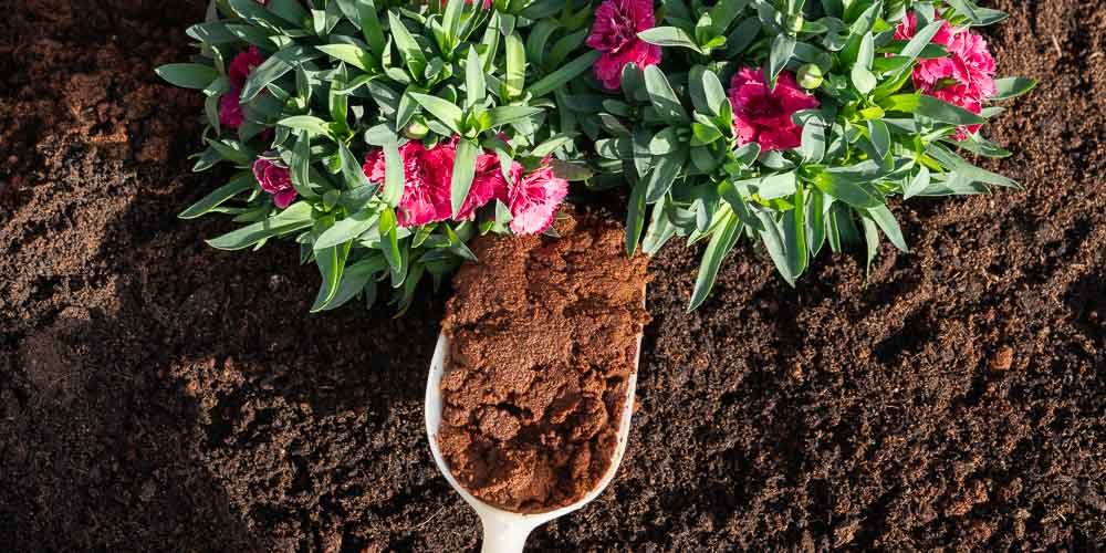 Πώς χρησιμοποιούμε τα υπολείμματα του καφέ στα φυτά