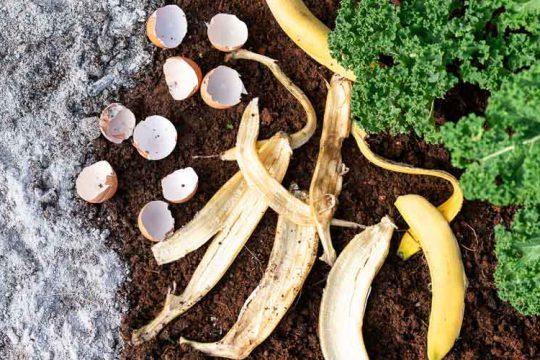 10 σπιτικά υλικά για λίπασμα στα φυτά