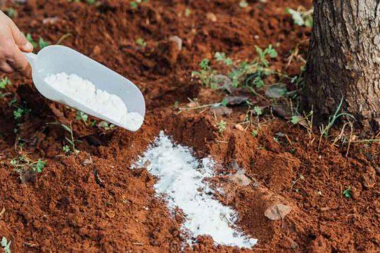 Βόριο, τι προσφέρει ως λίπασμα σε φυτά και καλλιέργειες