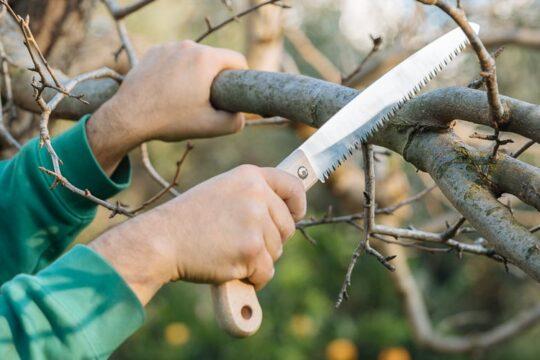 Κλάδεμα καρποφόρων δέντρων