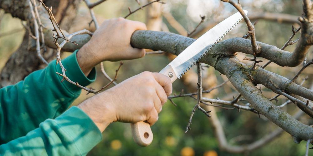 Ποια εποχή και πώς κλαδεύουμε τα καρποφόρα δέντρα (+video)