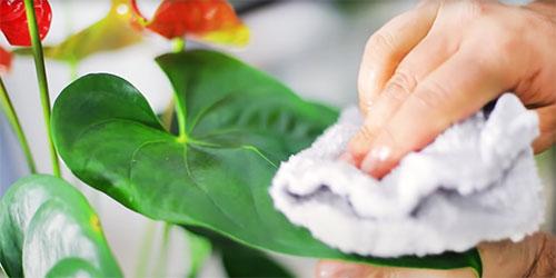 Καθάρισμα φύλλων