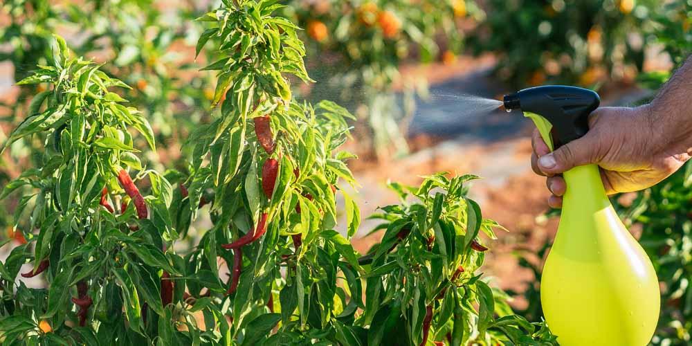 Λάδι στα φυτά